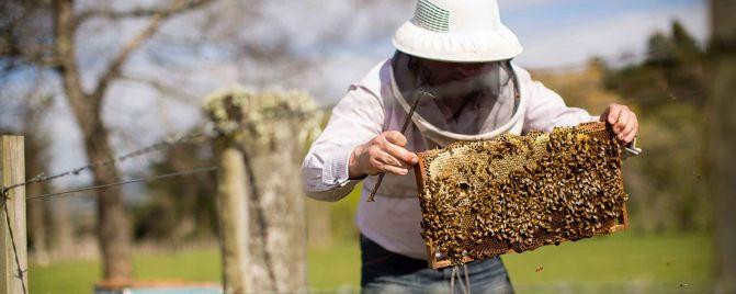 Blueskin Bay Honey